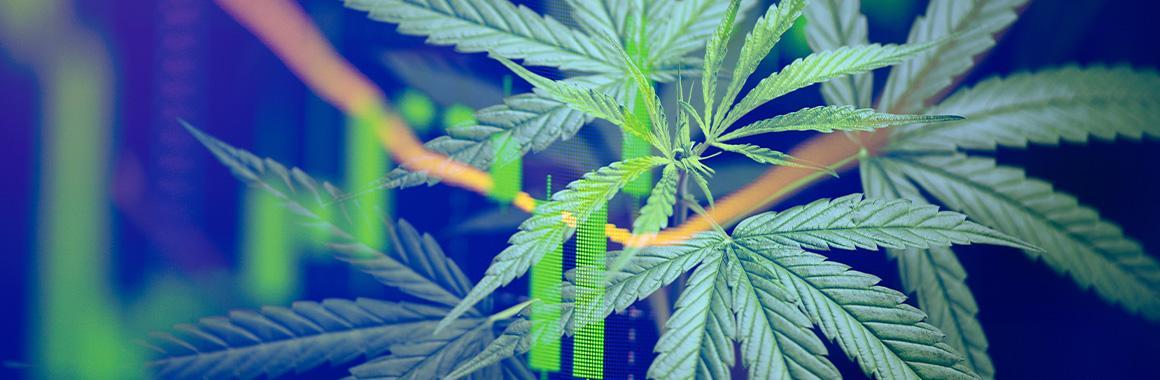¿Cómo invertir en existencias de productores de cannabis?
